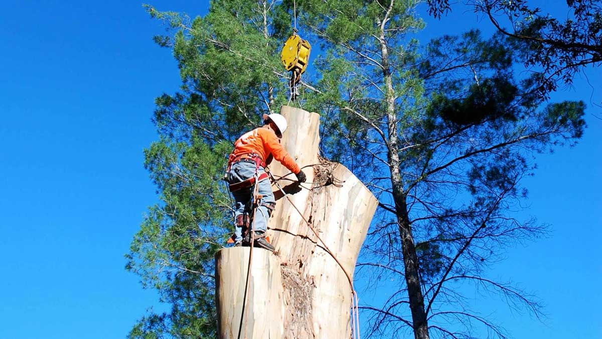 Tree Removal in North Sydney