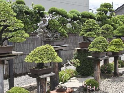 Design-a-Bonsai-Garden