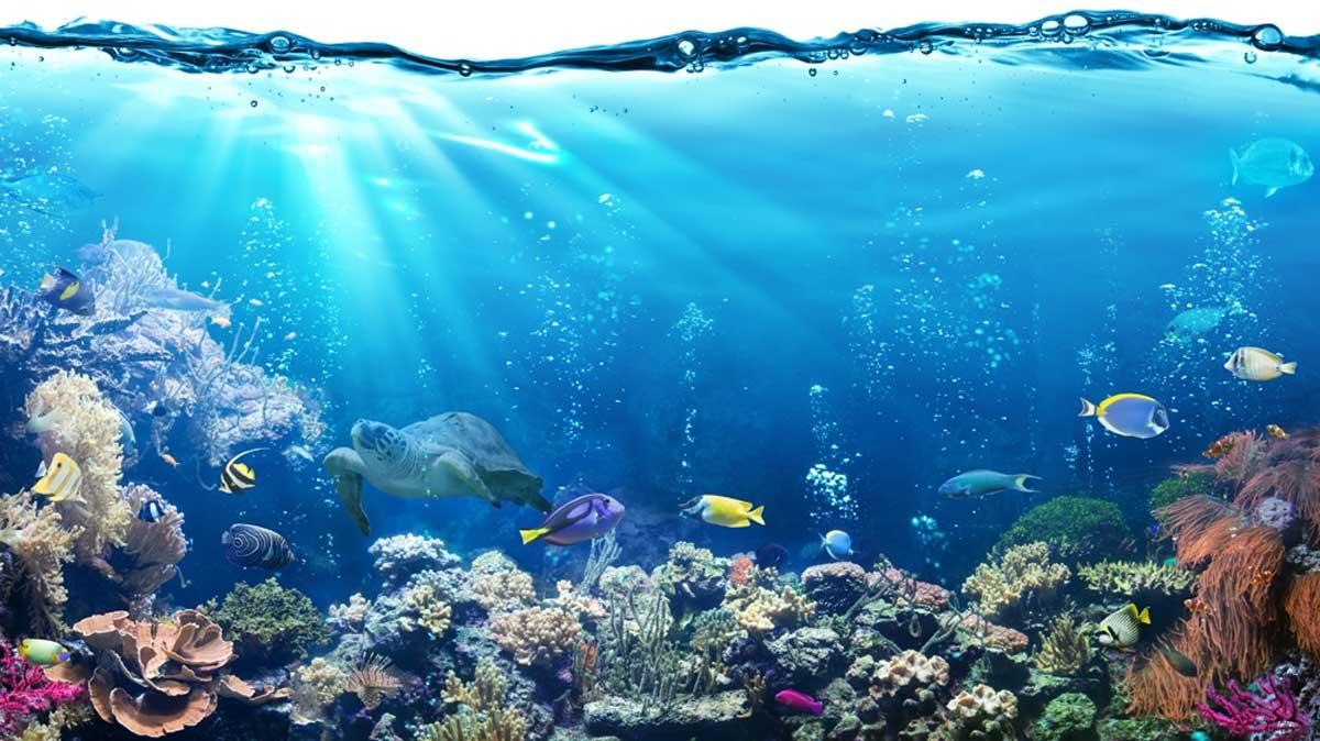 Dangerous For Our Oceans & Marine Life
