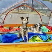 Your Dog While Camping