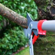 Different Types Of Tree Trimming What You Need To Know